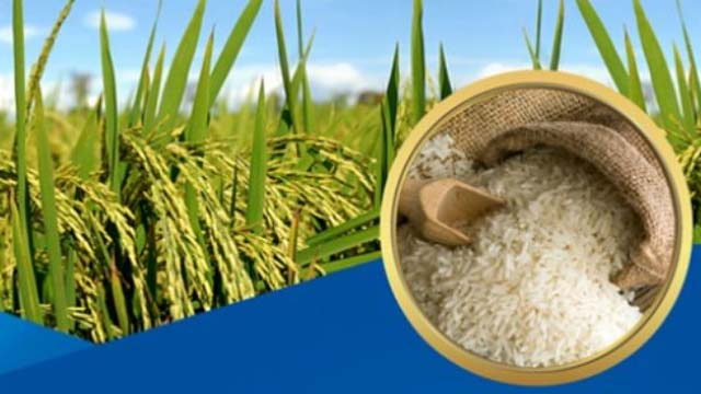 Ngành xay xát lúa gạo, Chế biến tinh bột